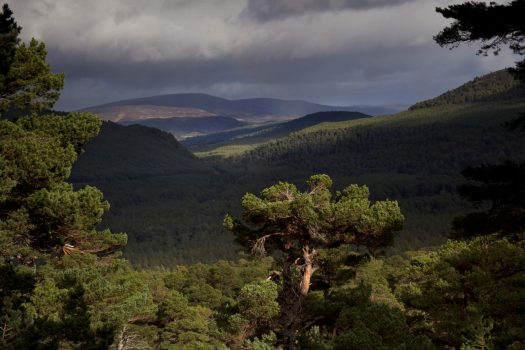 Balmoral Estate, Aberdeenshire, Scotland - Ballochbuie pine forest and far Cairngorms (NCN)