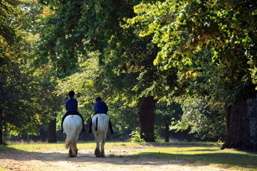 Hyde Park Stables, London (NCN)